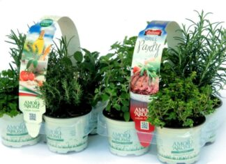 Kit piante e fiori