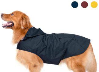 Abbigliamento e accessori per cani