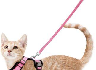 Collari imbracature e guinzagli per gatti