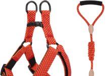 Collari imbracature e guinzagli per piccoli animali